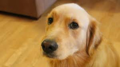 Canines, Different Companion Animals Are Potential Carriers Of Killer Flu Virus: Examine