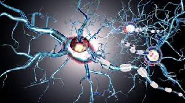 Researchers look at repairing damaged nerve cells